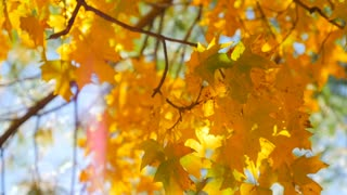 Close up of colorful leaves in the fall with a sunflare