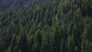 Aerial Drone Footage Rising Showing Evergreen Trees On A Mountain