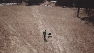 Aerial Of Person Throwing A Stick For His Pet Border Collie Dog 1