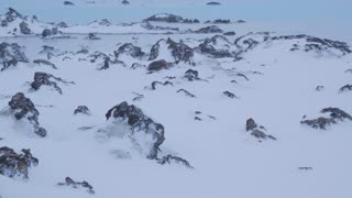 Iceland Snow Covered Lava Field In Winter With Sulfur Pool 2