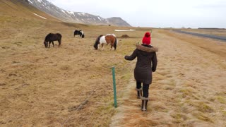 Iceland Tourist Walking Towards Horses In Winter 1