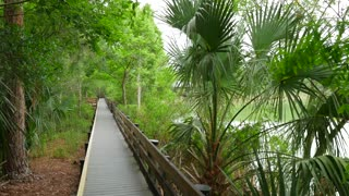 Moving Along Florida Slough Wooden Path Beside Trees And Marsh