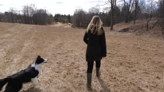 Young Female Walking On Farm Land Throwing A Stick For Her Border Collie Dog 1