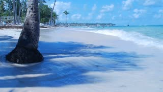 Water coming onto the beach and surrounding a palm tree in the caribbean