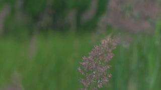 Green grass field close up nature