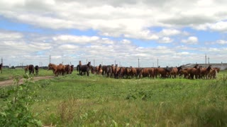 Horses grazing on a green field in the background electricity poles