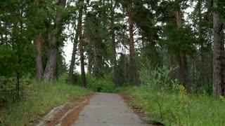 Sport woman running through the woods. Sport concept.