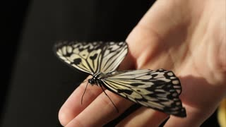 A small butterfly sits on a man's hand, an insect waves with patterned wings and wiggles a pancake antennae, a woman holds an insect on her fingers
