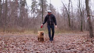 a young man is leading a dog on a leash, friends are walking along the autumn park, the animal is happy with fresh air and foliage under the feet