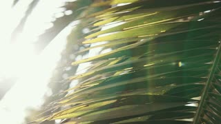 Close up shot of a beauitful palm leaf under sun light. Shadow falling on the leaf. Tropical tree.