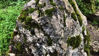 Close up shot of a big rock covered with moss in forest. Old and hard rock. Beautiful texture.