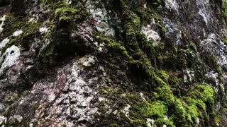 Close up shot of giant wet rock with a fresh green moss on. Beauty of the nature. Forests and mountains.