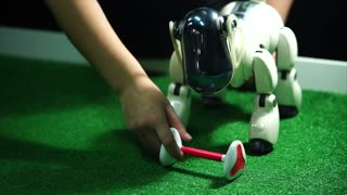 Electronic robot dog taking toy bone in its mouth. Robotic pets concept. Real dog imitation.