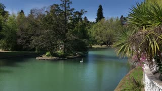 Fantastic park with a beautiful pond and little island in the middle. Lovely swan swimming alone in water. Green park, hot weather.