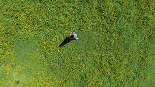Shot from above of happy young girl being happy on the wide meadow. Drone shooting a lovely girl spinning in the field.