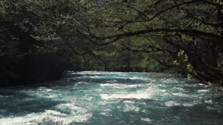 Springtime in woodland, blue picturesque river is streaming inside in daytime. Tranquil landscape with water and trees in sunny day