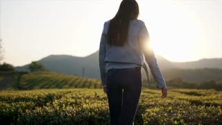 Young woman is stretching hands up during a sunset over mountains. She is rising hands up and looking on a picturesque tea plantation, back view.