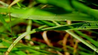 Wet green grass after rain close up