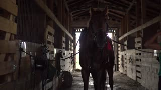 Woman rider brushing horse and prepare animal for dressage