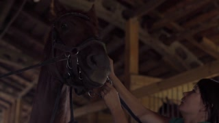 Woman rider cleaning horse face and prepare animal for dressage