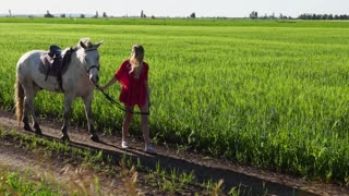 Young beautiful woman lead walk with a white horse on the green field