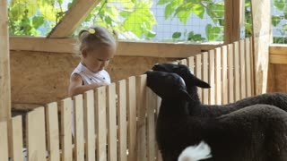Cute baby girl feeding sheep from her hands