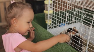 Cute girl giving guinea pigs an apple for feed.
