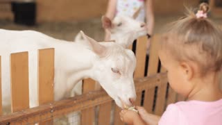 Cute little girl feeding a goat at farm.