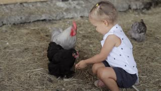 Cute little girl feeding chicken