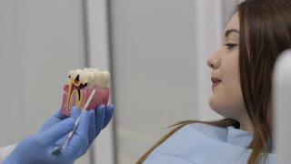Dentist talking with patient and showing a model of teeth.