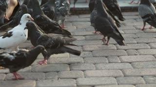 Little cute girl feeds pigeons near fountain