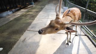 Little girl feeding deer in the park