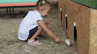 Little girl feeding guinea pig