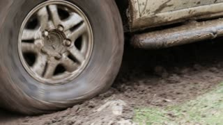 Car's wheels in mud in the forest, off-road.