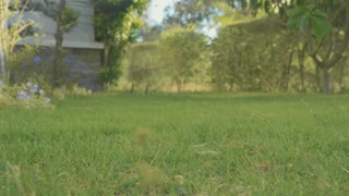 Close-up feet of barefoot girl at domestic garden with green lawn in slow motion