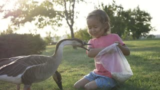 Girl feeding goose but goose attack and plucked her and she is run away