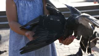 Little cute girl feeding street pigeons in the park at summer day 4K slow motion
