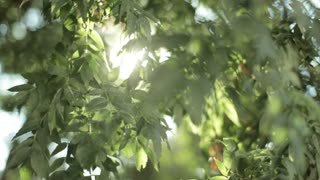 Warm sunlight and light leaks in the green leaves