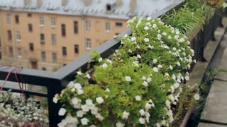 Flowers on a Balcony Overlooking the City