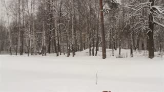 Man Playing With the Dog Jack Russell in a Snowy Forest