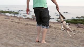 Man Plays With a Dog on the Beach