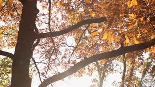 Sun Through Autumn Leaves