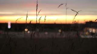 Sunset in a Field of Grass Stalks