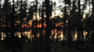 Sunset in the Forest. Dusk