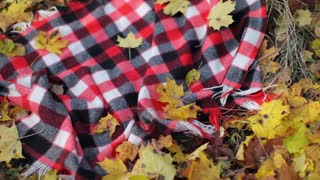 checkered red plaid in autumn foliage