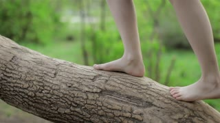 Female Legs Climb the Tree Trunk and Descend