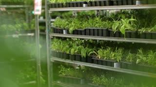 garden plant shop
