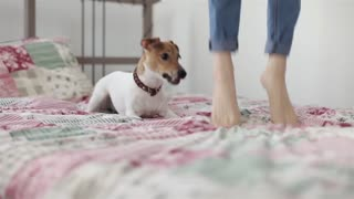Girl Jumping on Bed Together With Dog