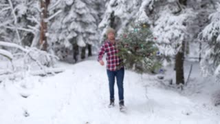 man cut down and carries a Christmas tree in the winter forest