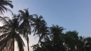 palm trees on sunset background
